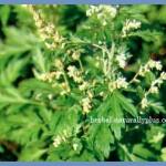Khasiat Herbal