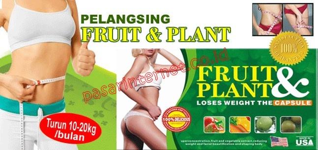 fruit plant kapsul pelangsing member stokis distributor terpercaya